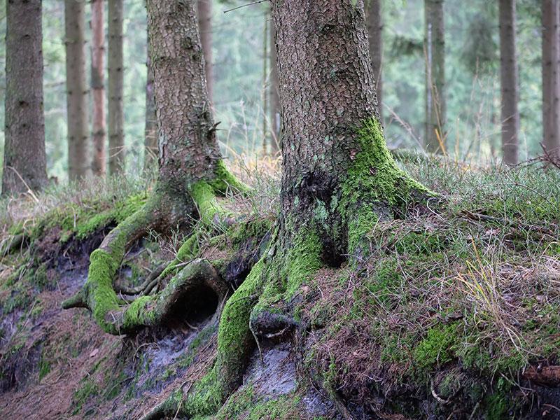 Natur in Lippe